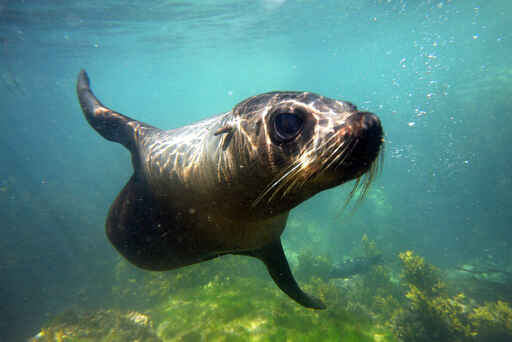 Seal Swim Kaikoura