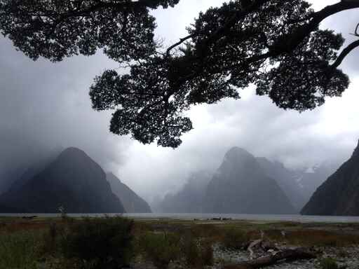 Milford Sound Foreshore Walk - Fiordland National Park