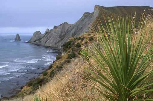 Cape Kidnappers Walking Track
