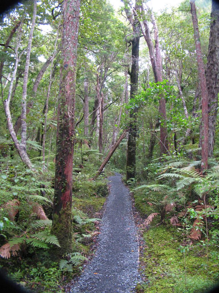 guided walks nz south island