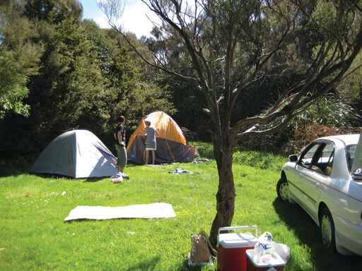 Holdsworth Camping Ground - Tararua Forest Park