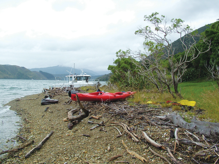 Pipi Beach in Pelorus Sound