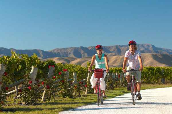 marlborough wine trail   bike  marlborough