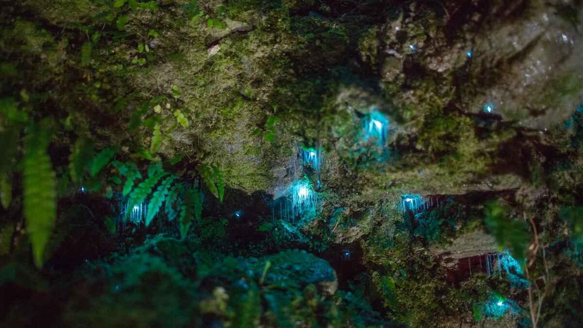 Glow Worm adventure - exclusive to park guests only