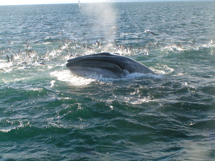 Whales are seen on an incredible 75% of trips!