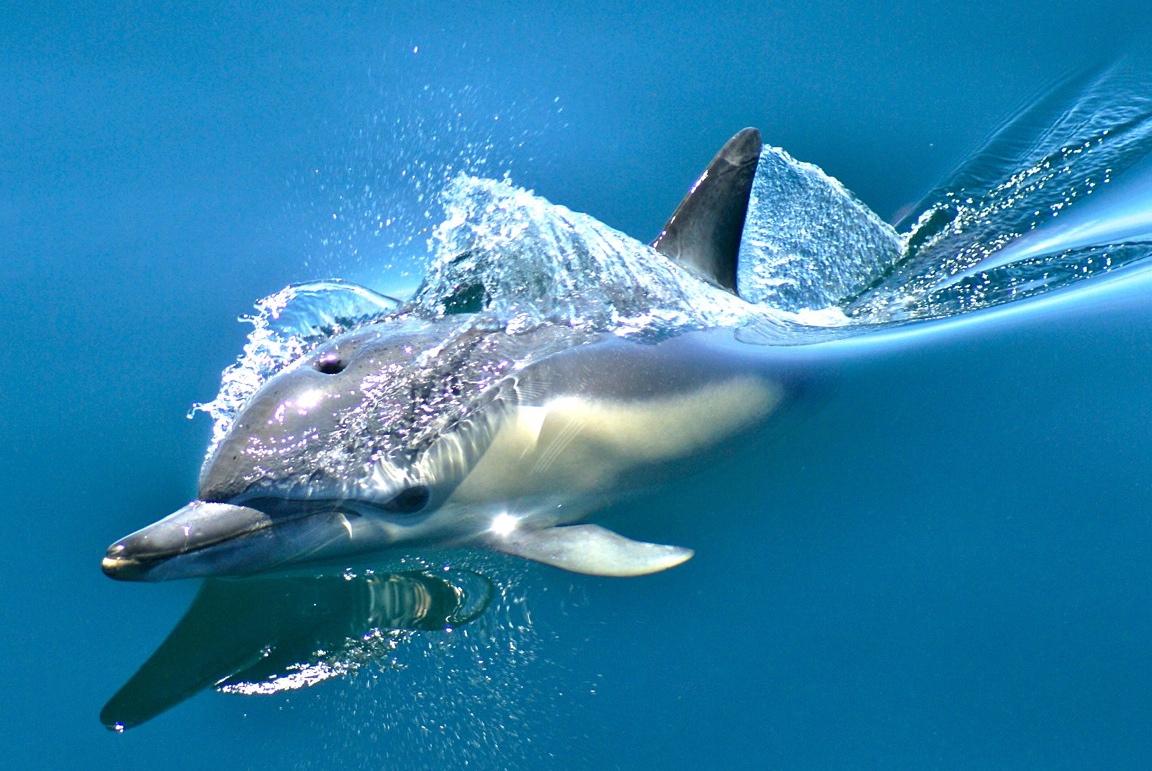 Kết quả hình ảnh cho dolphin safari