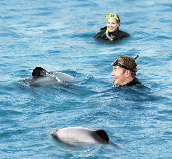 Up close with Hector's dolphins