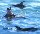 Swimming With Dolphins (Flipper)