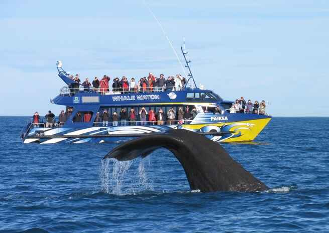 Travel To New Zealand By Boat