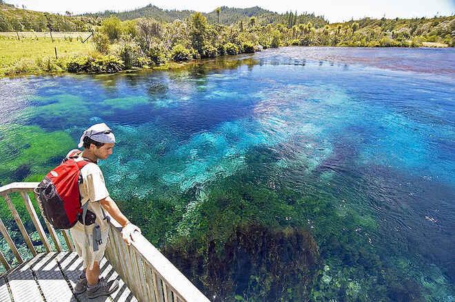 Pupu Springs walk - Takaka, Nelson Region, NZ - 82 travel reviews for ...