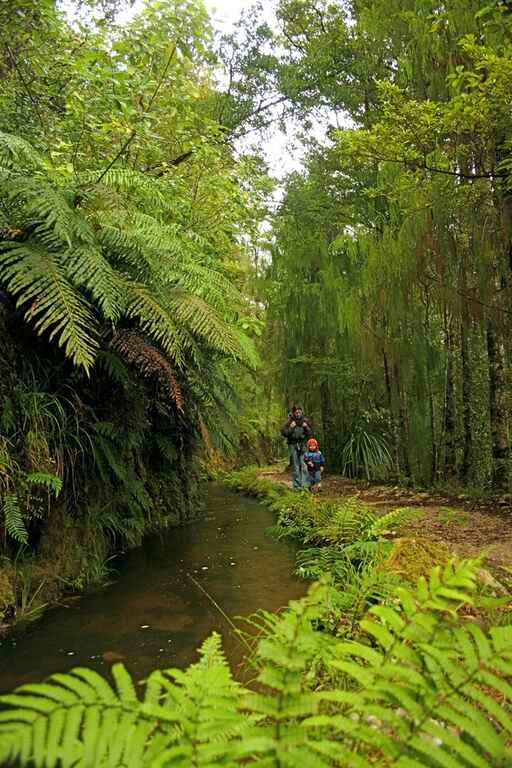 The track follows a man-made weir through native bush