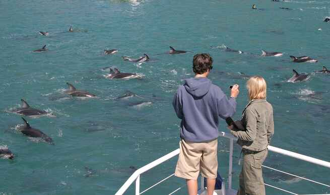 Photo session on the Dolphin Encounter tour
