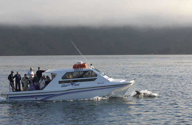 Dolphins in Queen Charlotte Sound