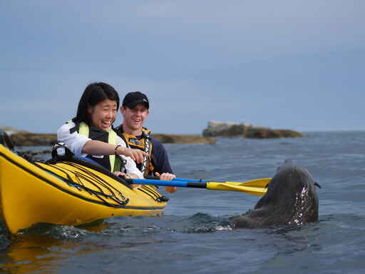 Seal Kayaking
