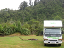 Waiohine campground is surrounded by native bush.